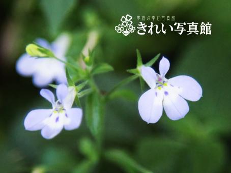 お花 のコピー